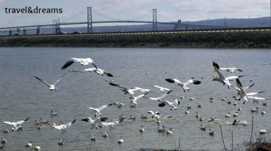 Illa d'Orleans a la ciutat de Quebec /  Orleans Island in Quebec City