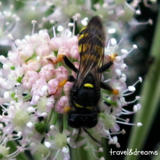Polinitzant/Pollinating