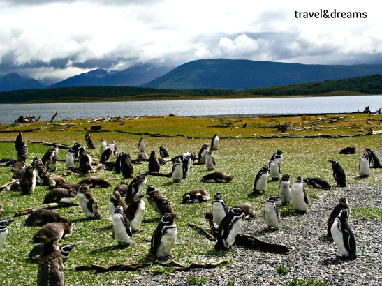 Isla Martillo amb el canal de Beagle al fons / Martillo Island with Beagle Channel