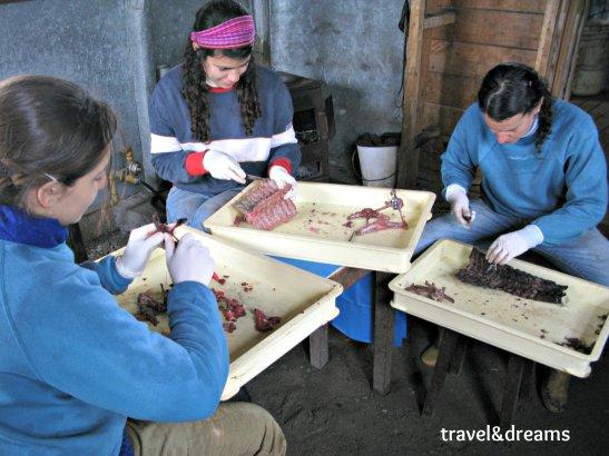 Biologues treballant al Museu Acatushun de la Estancia Haberton.Tierra del Fuego / Biologists working in Acatushun Museum in Estancia Haberton.Tierra del Fuego