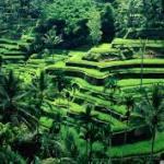 Tegalalan. Bali
