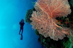 Pemuteran Reef. Bali