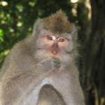 Monkey Forest. Ubud.Bali