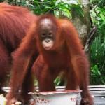 Tanjung Puting N.P. Borneo