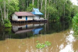 Sekonyer River. Borneo