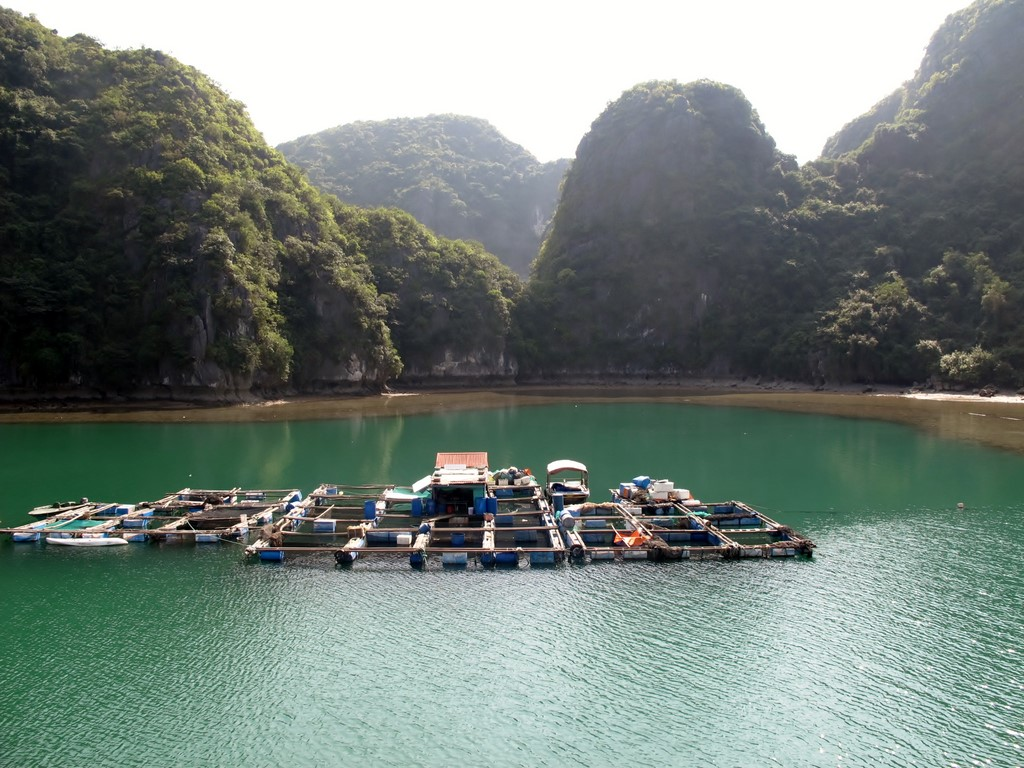 HA LONG (165) (Copiar)
